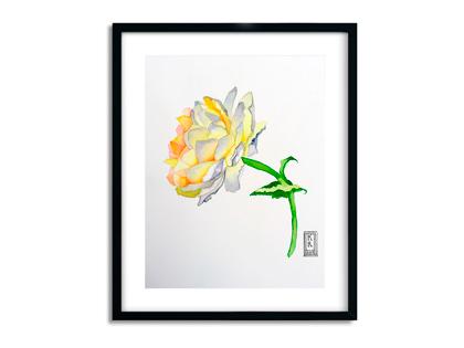 Akvarel illustration af hvid rose