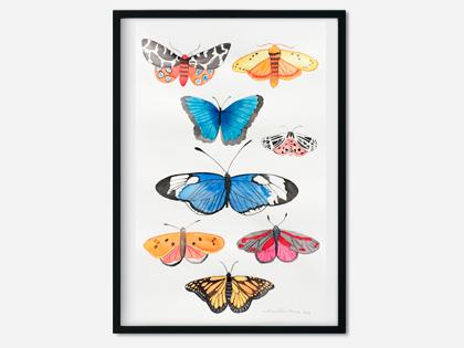 8 sommerfugle
