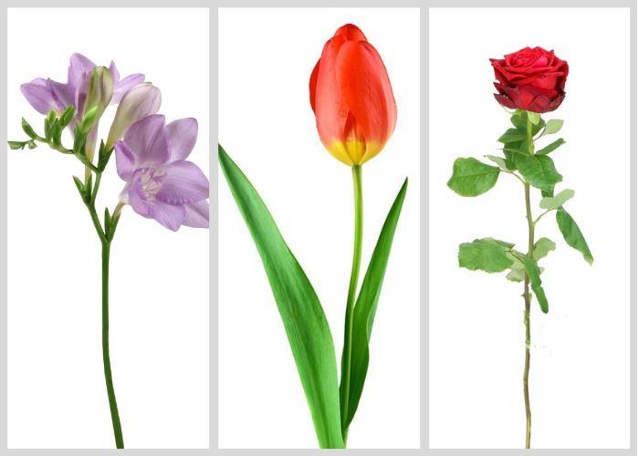 Tre populære blomster til mors dag af Kamilla Ruus