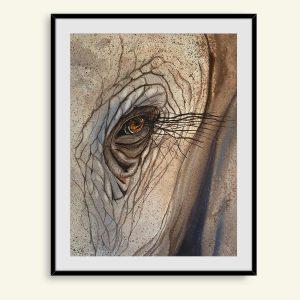 Akvarel maleri elefant øje af Kamilla Ruus